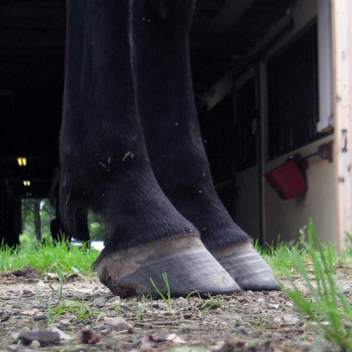 Mustang Hooves