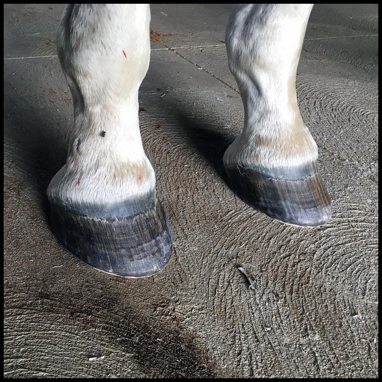 EL - Front Feet